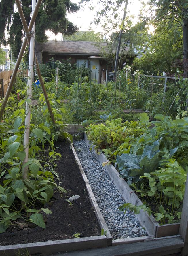Vegetable garden 1