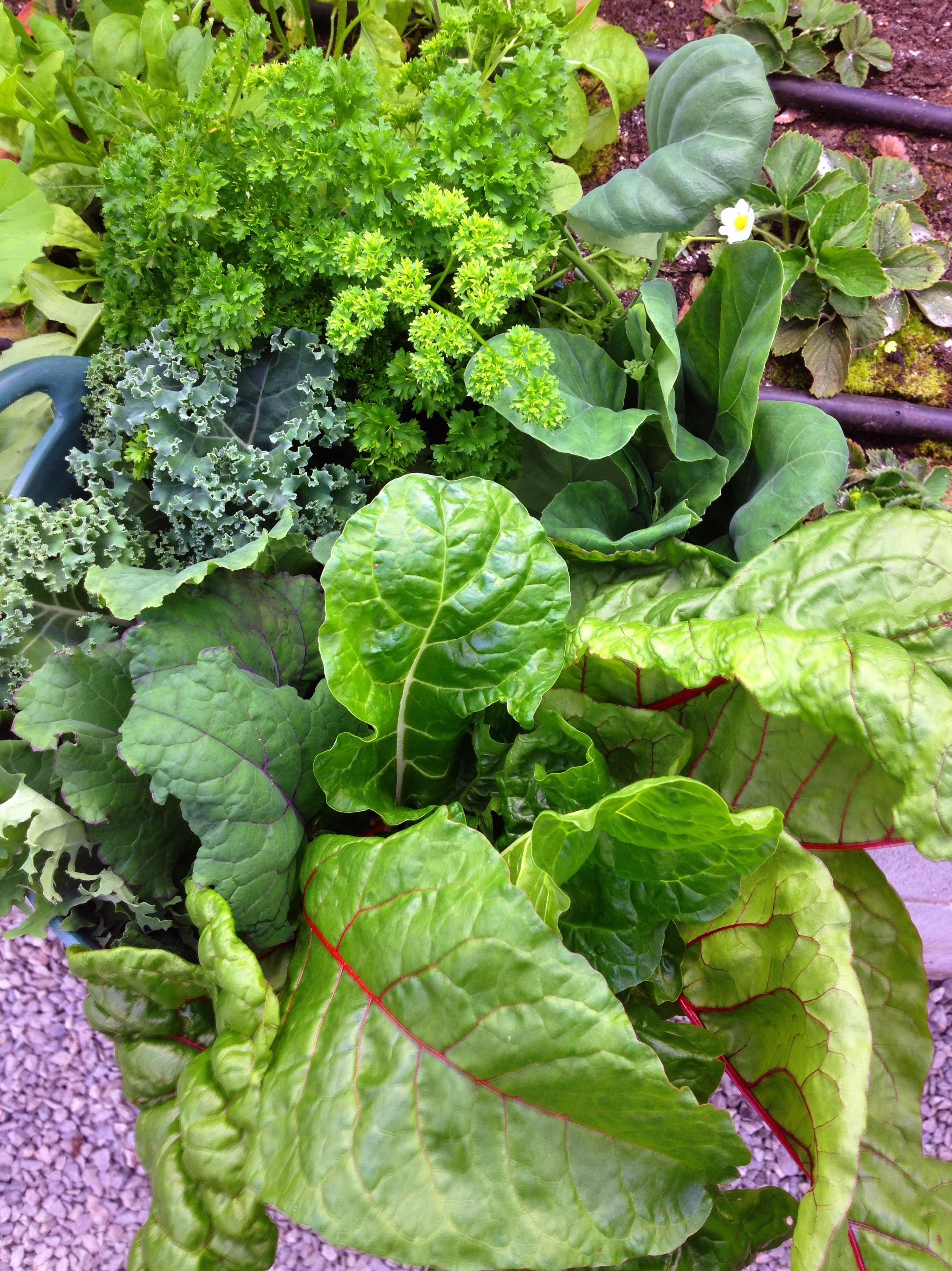 Food garden pictures - Img_8362
